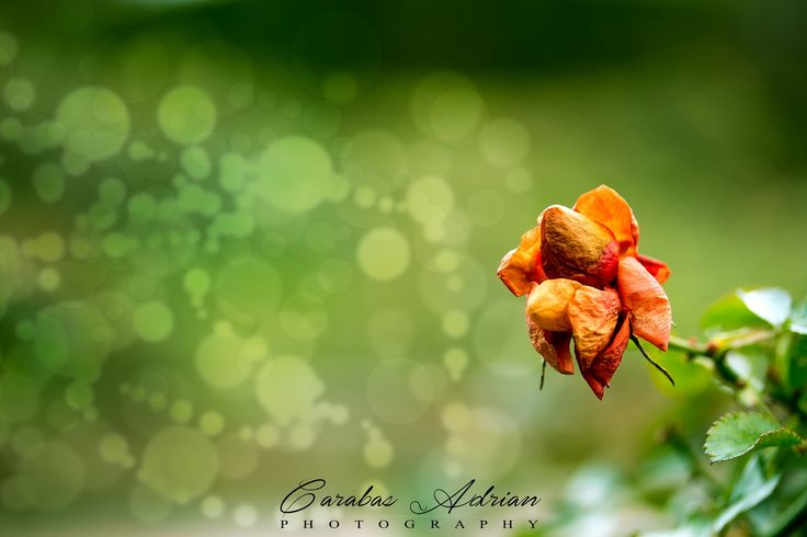 bubble and flower by Ady Carabas on 500px