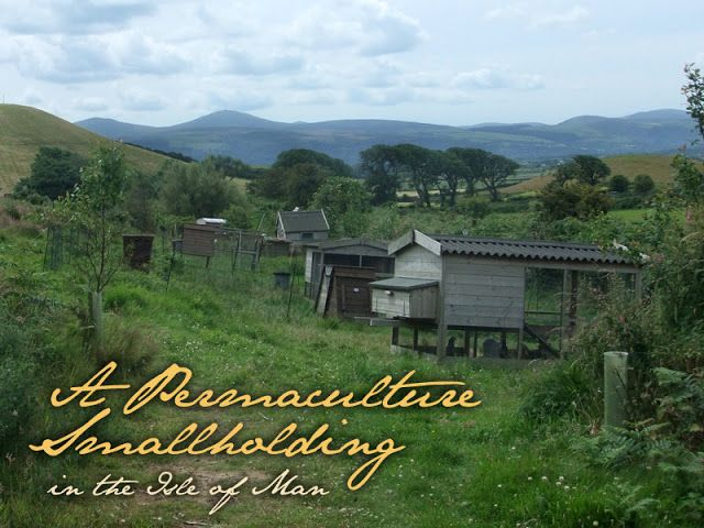 A Permaculture Smallholding ~ Lovely Greens   The Beauty of Country Living