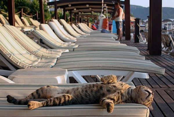 Image result for cats on a cruise ship