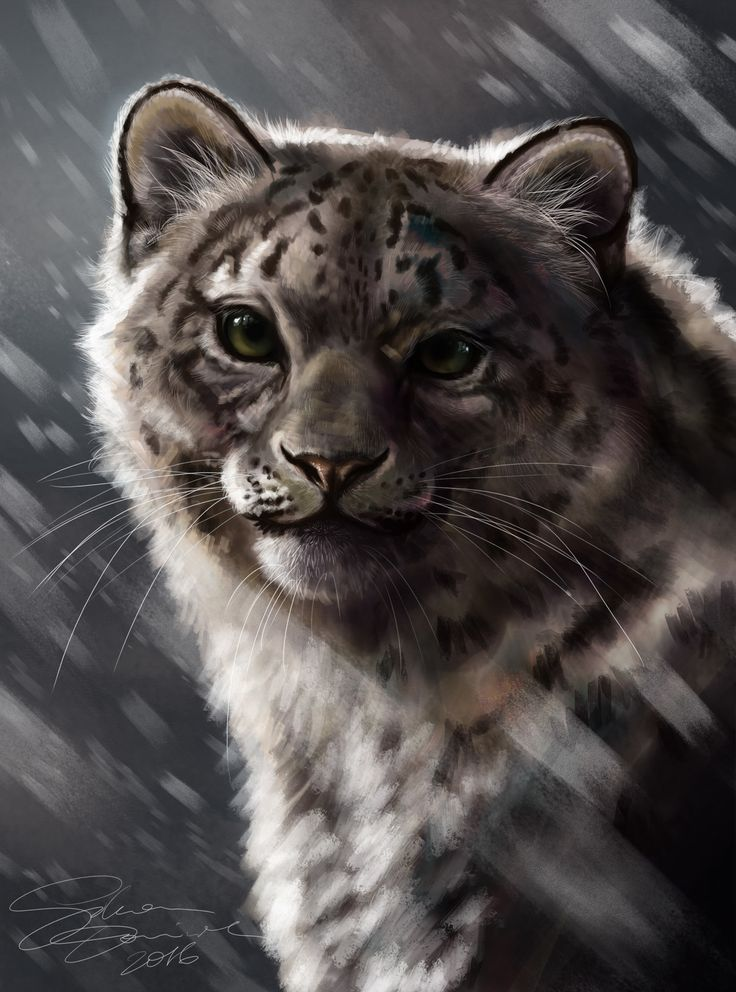 Snow Panther, Dominika Sikora on ArtStation at https://www.artstation.com/artwork/VkKB5