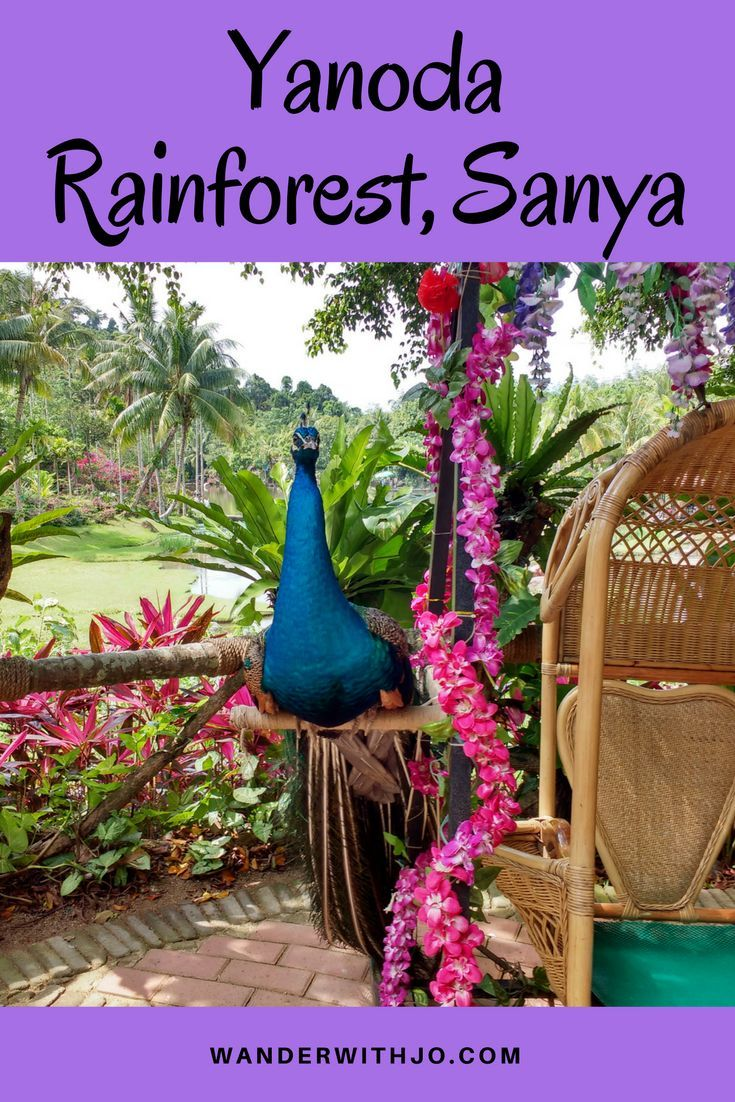 A visit to Yanoda rainforest in the lovely resort destination of Sanya is a must. Head to hainan island in China to enjoy this amazing attraction with family and friends.
