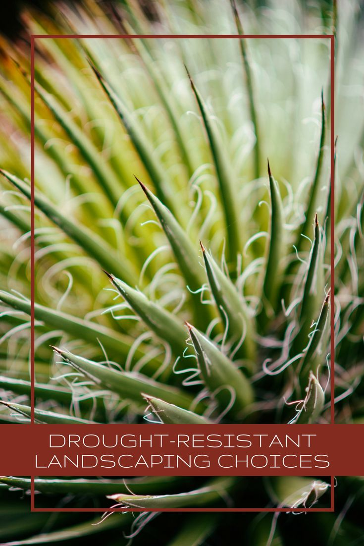 Conserve water with our selections for drought-resistant landscaping choices. These are perfect for California or any area where water is a premium.