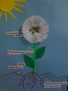 Create parts of plant (too cute) and easy writing activity (includes making a flower of their choice using construction paper). Use with From Seed to Plant