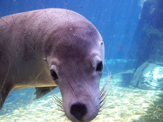 AQWA seal by msdebbie - remembering a time when I travelled to Perth with my little sister Lynd. Loved the aquarium & this seal especially :)