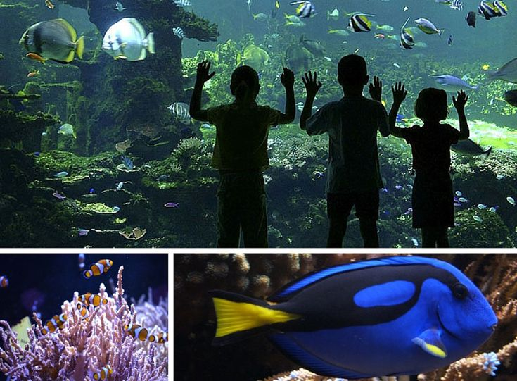 Who can forget Finding Nemo, the cute Disney film that turned clownfish into stars. Disney is to release a follow up in July 2016 – Finding Dory, a chatty blue surgeon fish. At NAUSICAA, the French National Sea Centre, there's no need for cartoons as the real thing, sure to thrill families, can be seen in the tropical lagoon. Details: Nausicaa.co.uk Approximately 30 minutes from Calais Port