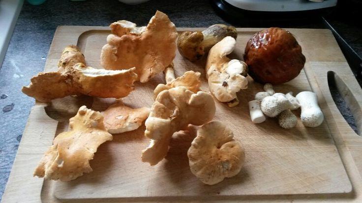 Les 61 meilleures images du tableau champignons sur - Cuisiner les champignons pieds de mouton ...
