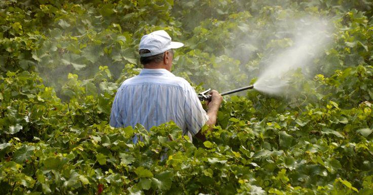 On se souvient du combat de Marie-Lys Biberyan contre l'utilisation intensive des pesticides à Bordeaux.
