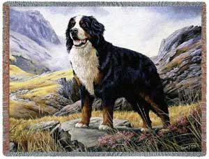 Bernese Mountain Dog Throw Blanket. Dog Lover Gift Blankets. The Bernese Mountain Dog pictured on this throw blanket is originally painted by artist Robert May who is famous for his canine compositions. He has done a wonderful job with this large Bernese Mountain dog. This makes a beautiful gift for the large dog lover.
