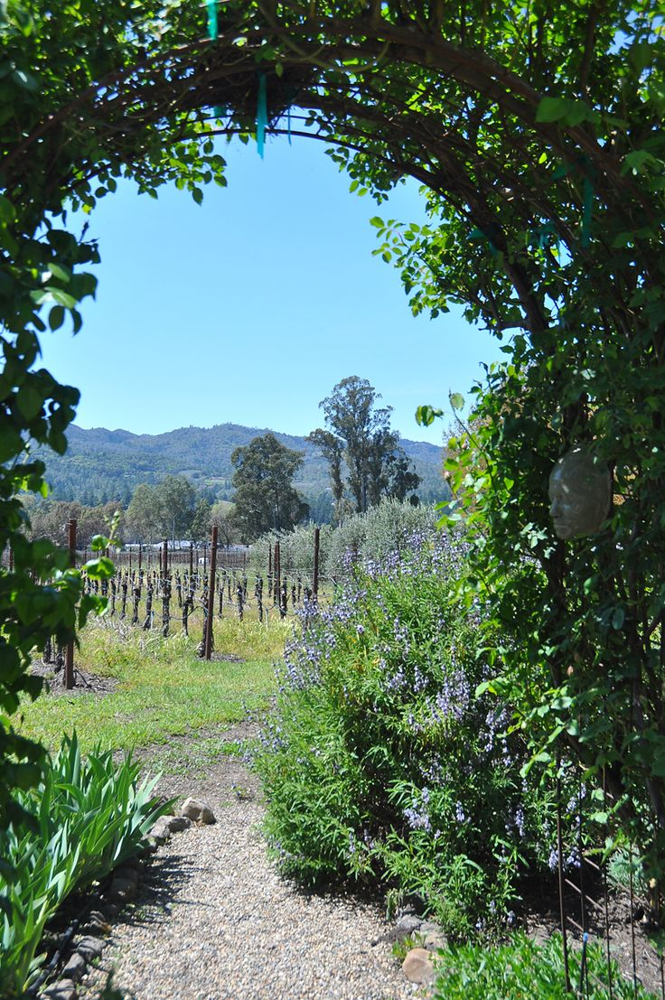 Saint Helena garden - A view of Napa Valley grapes
