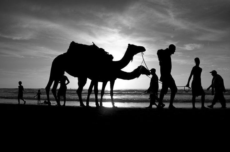 ph. © AbdelAzim Altaghloby