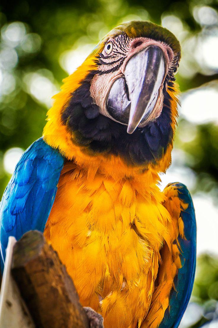 #parrot #portrait #saveanimals #medellin #thephotosociety #colors #colombia #magiasalvaje #zoosantafemedellin