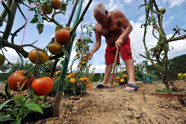 Termeljen biozöldséget zsebkendőnyi kertben! növénytársítás biogazdálkodás organikus zöldség kertészkedés