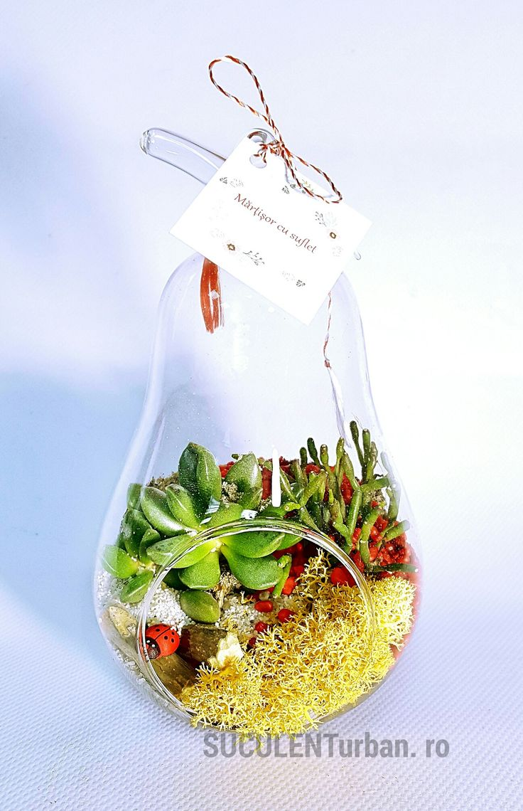 Mini terariu cu plante suculente în vas tip pară