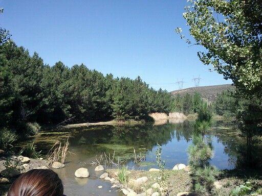 Walt's pond, Golden Oak Ranch, Newhall, CA