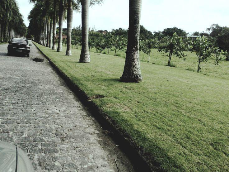 Rumo ao Castelo de Brennand- Recife/PE - 2012