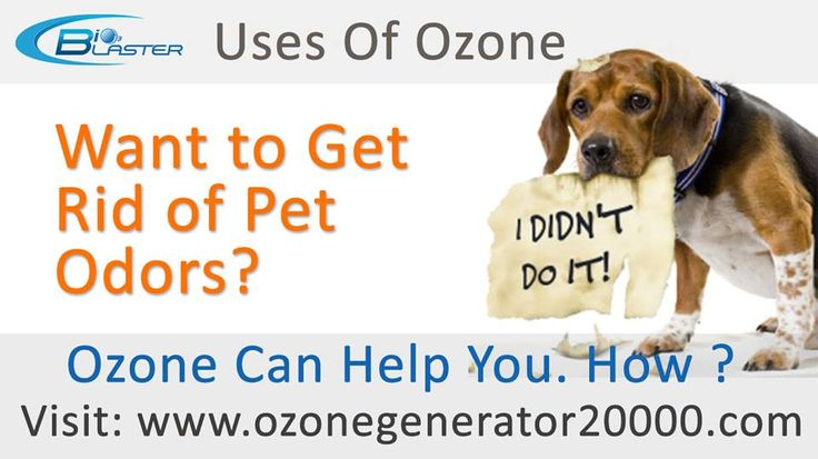 Love #Pets? But #PetOdors Irritates? Remove them with the power of #ozone. #Bio3Blaster #OzoneMachines can remove pet odors and #Sanitize the air. Buy online: https://www.ozonegenerator20000.com/pests.php