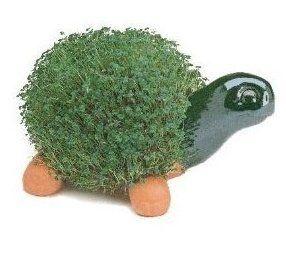 Turtle chia pet! :D    http://www.amazon.com/dp/B001OD57AA/ref=cm_sw_r_pi_dp_snSMqb1Q64HNH