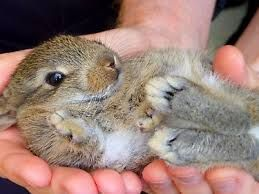 baby rabbits for sale - Google Search