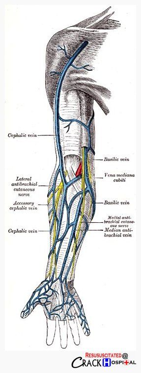 Veins of the arm...such a beautiful drawing, it looks like it's from the original Gray's Anatomy book