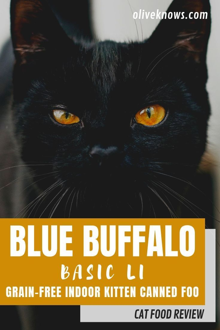 Blue Buffalo Basics Li Grain Free Indoor Kitten Canned Food Review Cat Food Reviews Best Cat Food Cat Food