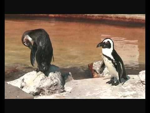 Skegness Natureland Seal Sanctuary - YouTube