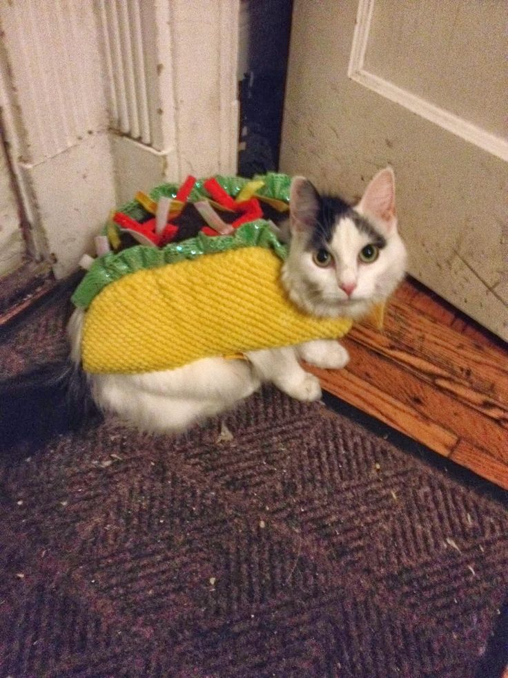 Taco Cat Costume >>> Visit the image link for more details. #CatsBreed