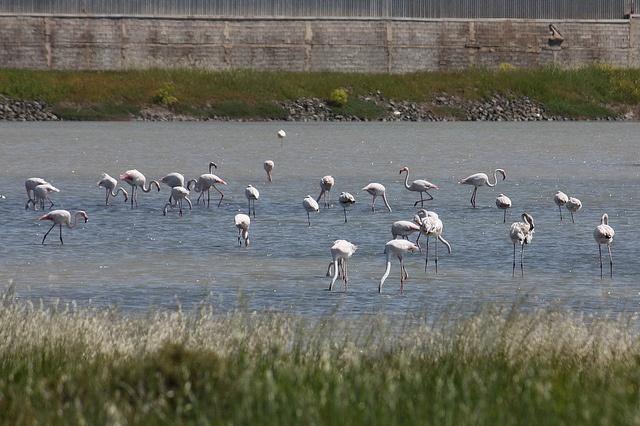 Birdwatching at Kalloni, Lesvos, Greece.    Blog post.