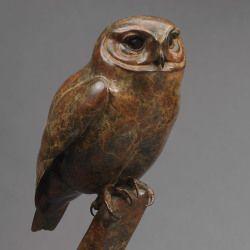 Little Owl by Nick Bibby