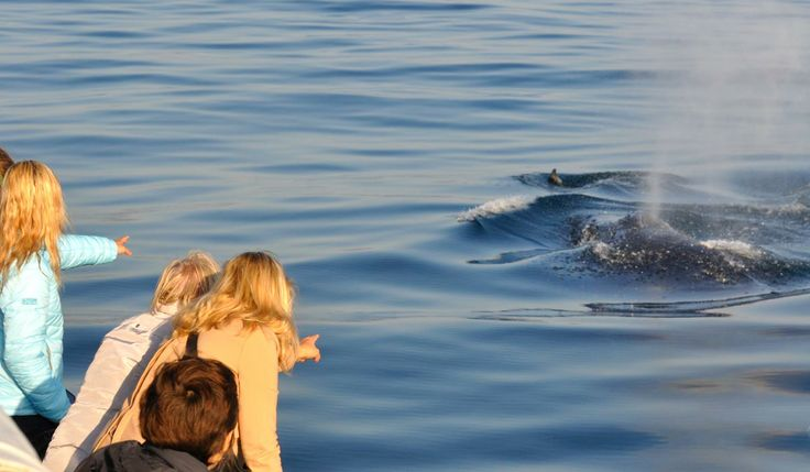Hermanus in Western Cape: Whale Watching  http://www.southernrightcharters.co.za
