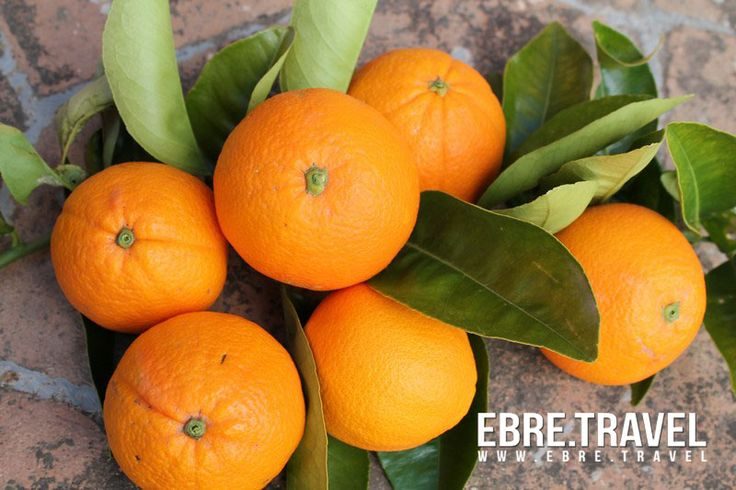#Taronja, la reina de les fruites a #TerresdelEbre. Ara està deliciosa!. #Orange, the queen of fruits in #TerresdelEbre. Now it's delicious!. #Naranja, la reina de las frutas en #TerresdelEbre. Ahora está deliciosa! http://www.ebre.travel/