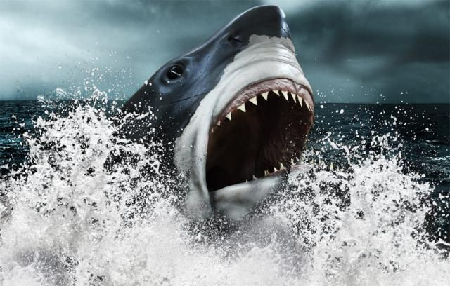 Which animals had the strongest bites, measured by pounds of force per square inch? Here's a slideshow of our top 10 candidates, ranging from dogs and gorillas to crocodiles and dinosaurs.: Megalodon (40,000 PSI)