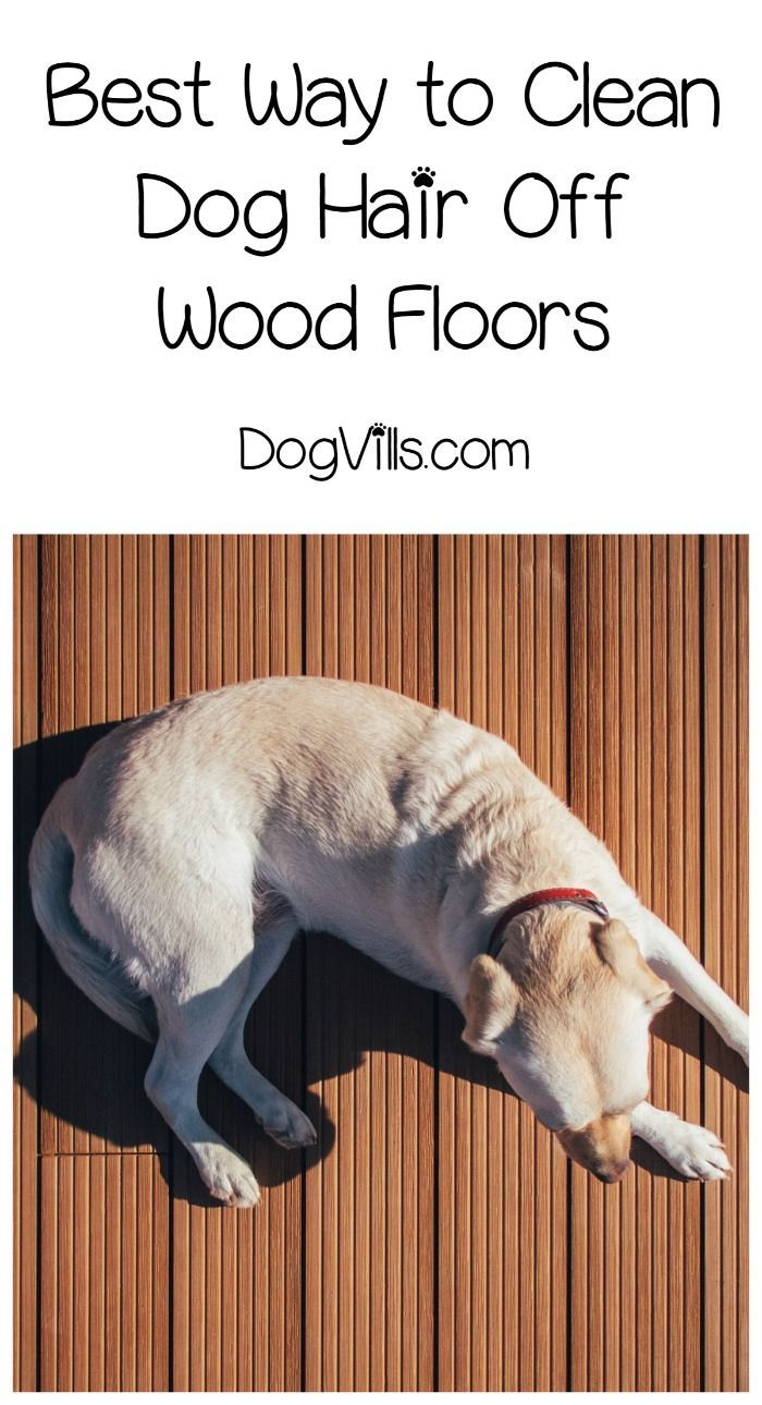 Wondering what is the best way to clean dog hair off hardwood floors? Take a look at our pet tips!