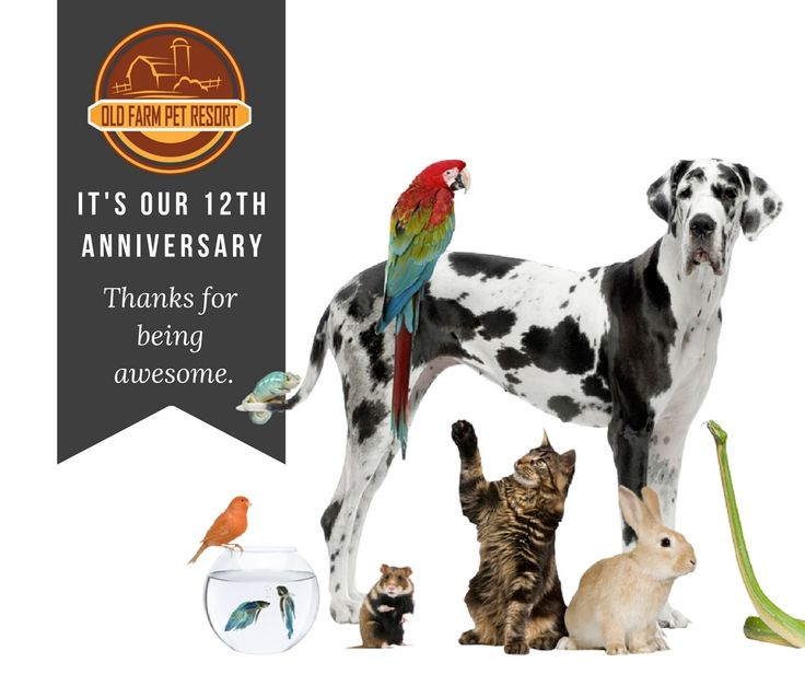Old Farm Pet Resort is celebrating it's 12 year