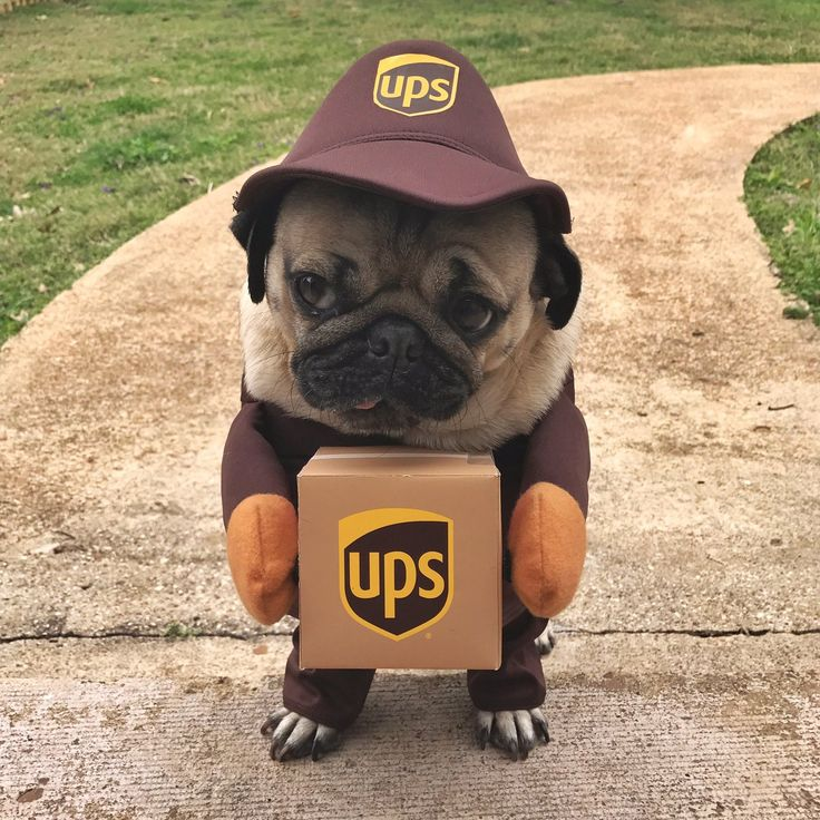 Cutest UPS guy ever!