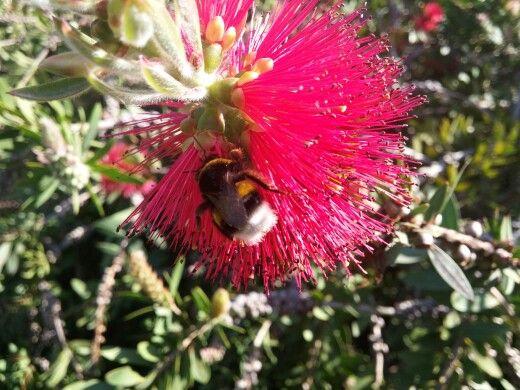 La planta de las abejas.