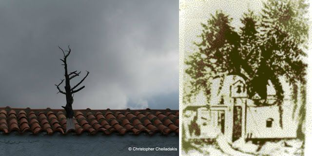Creteonair: TA ΔΕΝΤΡΑ ΤΗΣ ΠΙΣΤΗΣ : Στο χωριό Μαθές Αποκορώνου ...