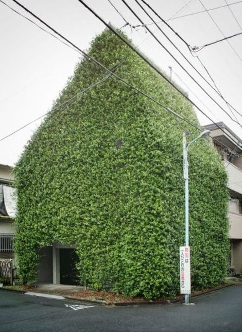 green facade plant architecture house vertical green sustainable urban green roof farm