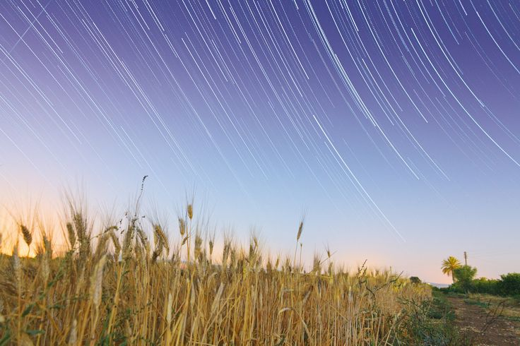 Star trail over a wheat field