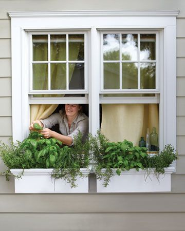 Kitchen Herbs in window boxes.