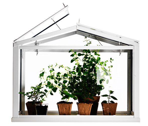 Socker Miniature Greenhouse Ikea Decor Pinterest