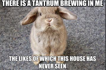 Rabbit Ramblings: Bunny Monday Meme*day (Tantrum)                                                                                                                                                                                 More