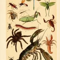Free Vintage Illustrations of Wild Insects