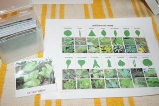 """Making Montessori Ours"": Botany 2 - Montessori Leaf Cabinet Work"