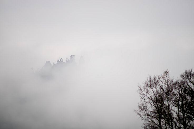 https://flic.kr/p/KvZq5H | entre la niebla