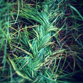French braiding grass