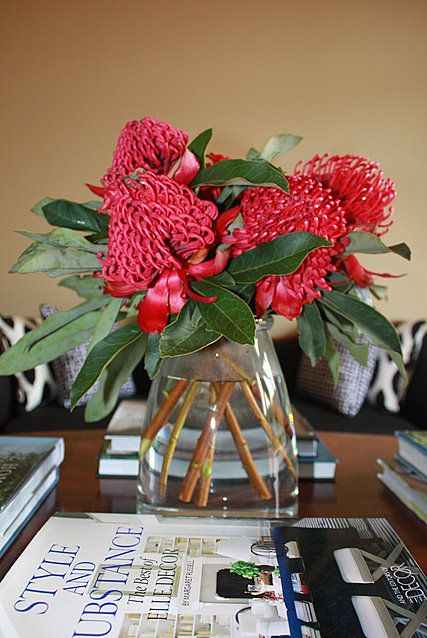 Brabourne Farm Life. New South Wales' state flower Waratahs. Would love to be able to grow enough to pick them.