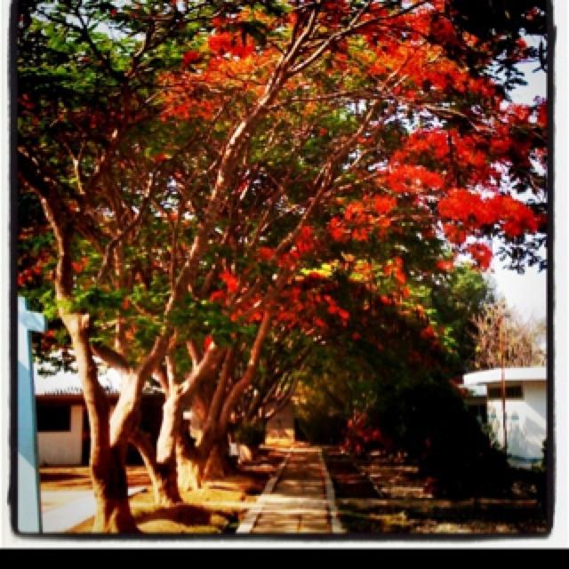 Appreciating my surroundings: Surroundings, Garden