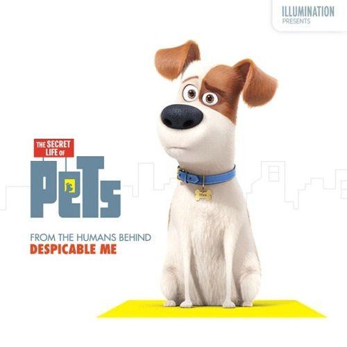 Cine Series: La vida secreta de las mascotas, nuestros animales viven sus propias experiencias
