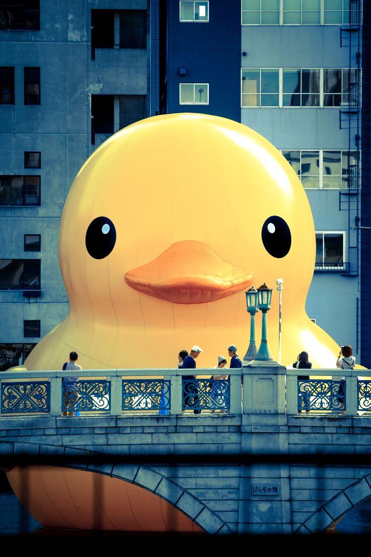 ラバーダック Rubber Duck Project 水都大阪 AQUA METROPOLIS OSAKA 2015 OSAKA, JAPAN