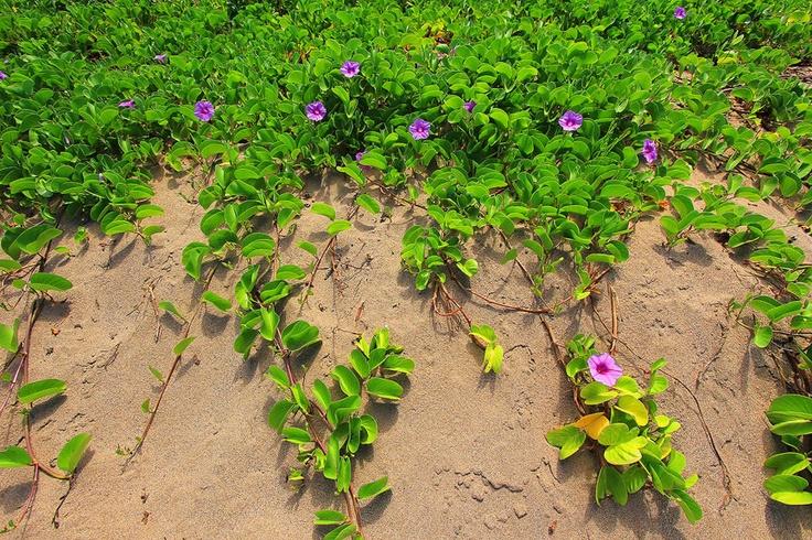 Garden Of Eden   GARDEN OF EDEN ARBORETUM 2 Сады острова Мауи
